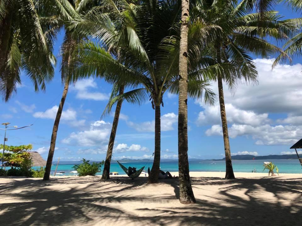 Daku Island Palm