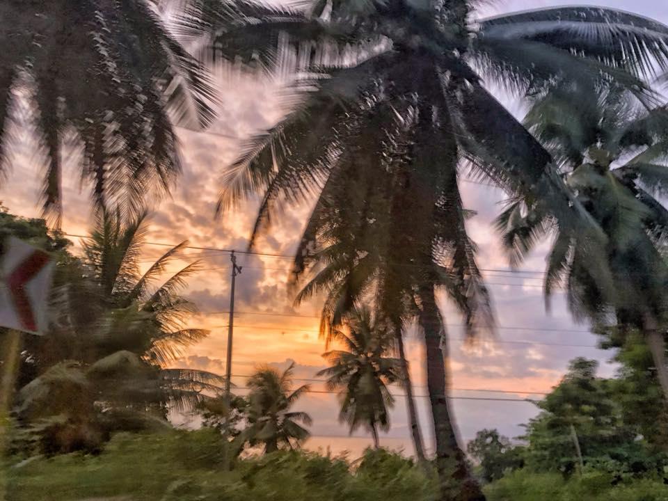 Oslob Sunset Palm Trees