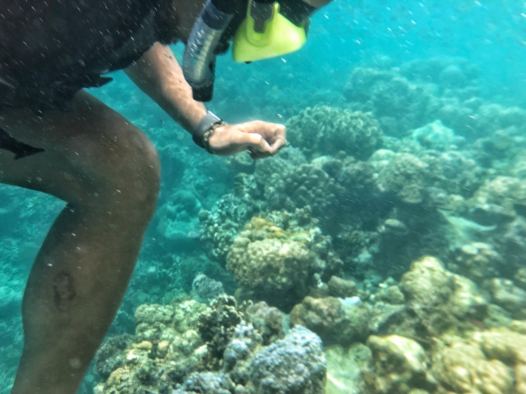 Things To Do in Coron While Raining Season – Photographic Account Japanese Ship Wreck Snorkeling