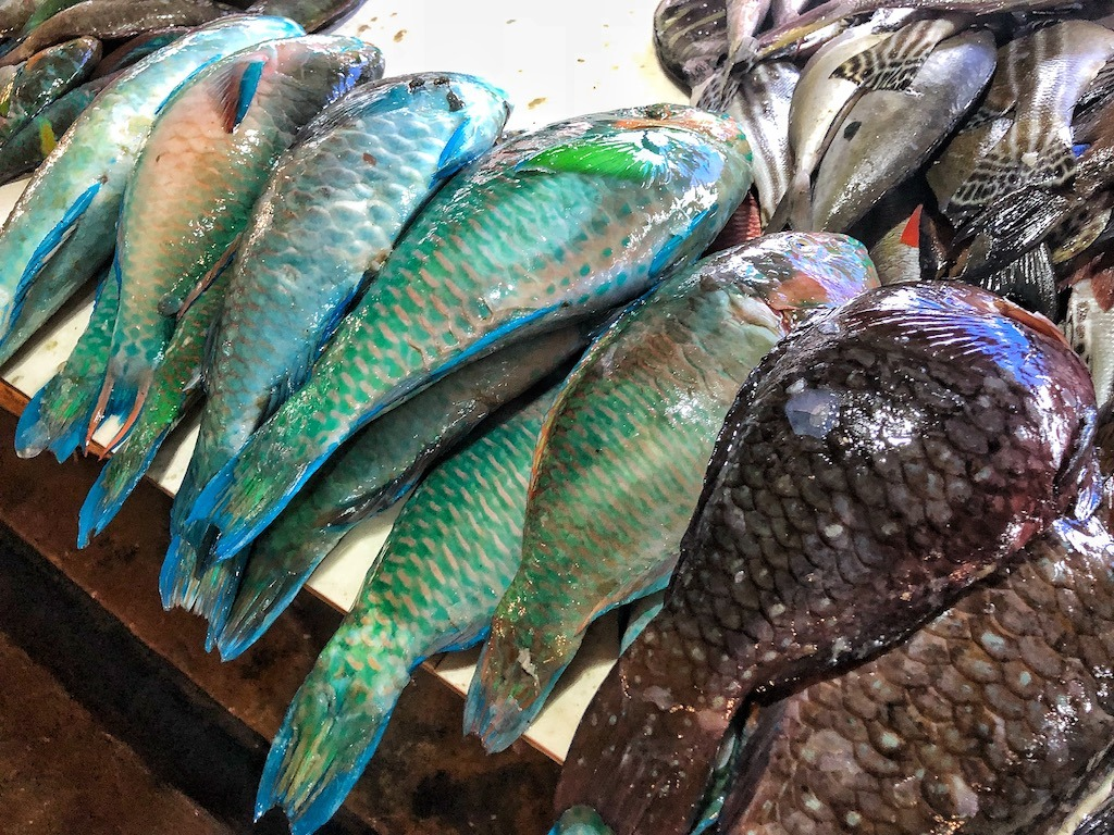 Things To Do in Coron While Raining Season – Photographic Account Local Martket Fish