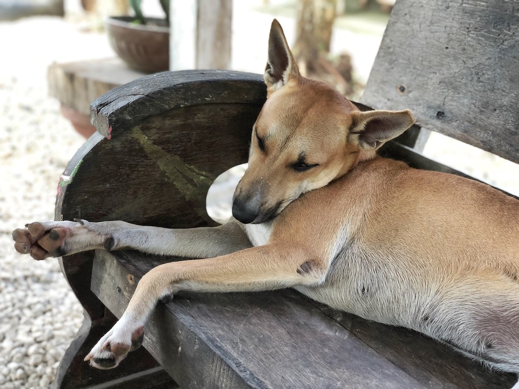 Place To Stay When Travelling To Bohol Panglao – Bohol Coco Farm Dog