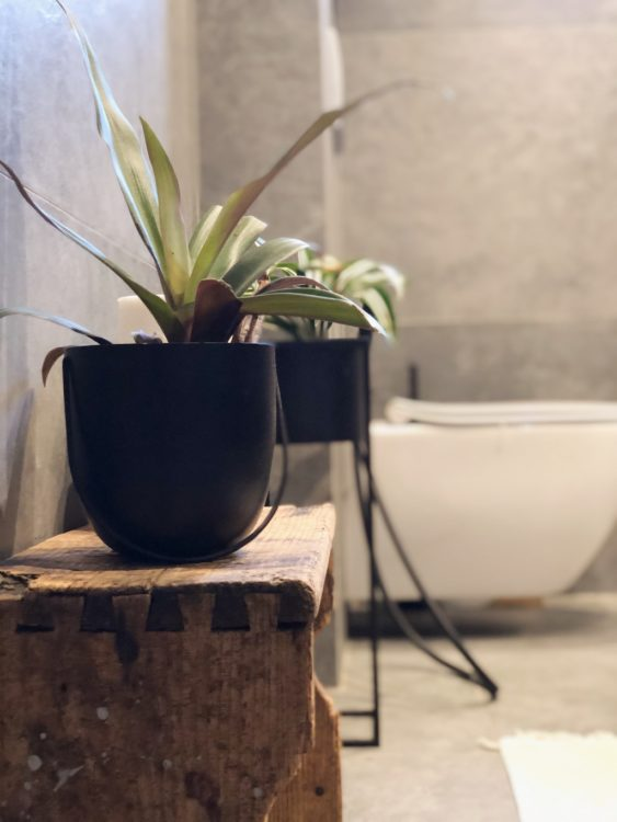 Plants Bathroom Renovation