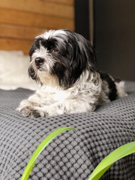 Bedroom Decor - Interior Design Cute Dog