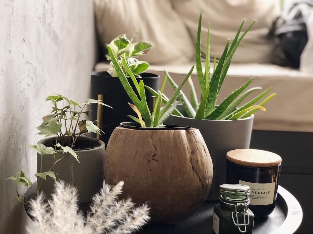 Bedroom Decor Plant Table- Interior Design