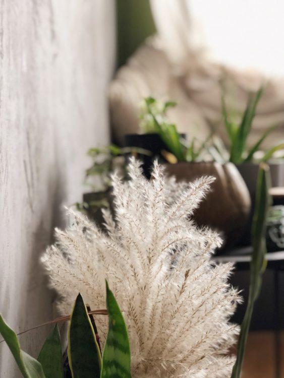 Bedroom Decor Plants