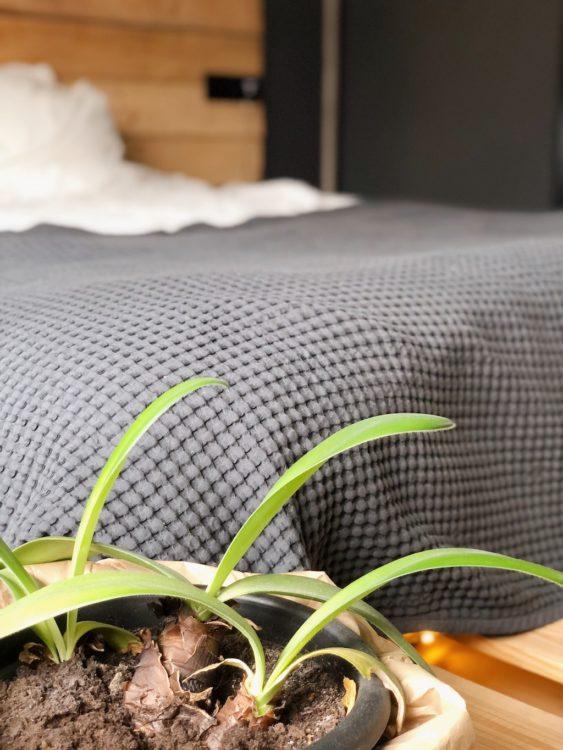 Bedroom Decor Plants - Interior Design