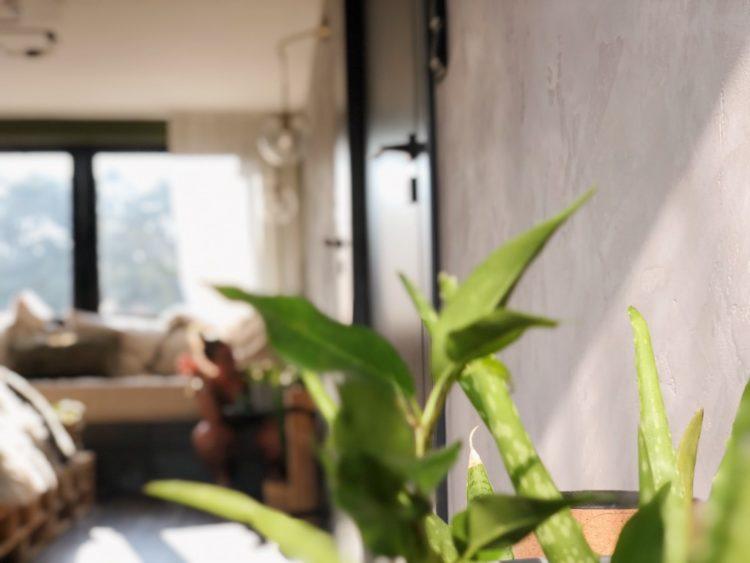 Bedroom Design Plants