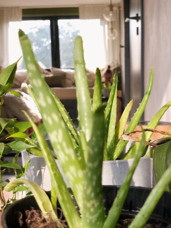 Plant Bedroom Mirror