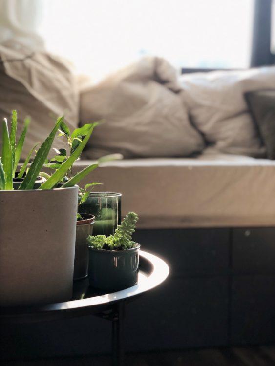 Plants Bedroom Decor - Interior Design