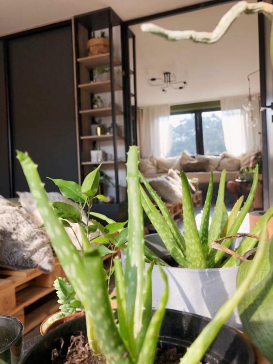 Plants Design Bedroom